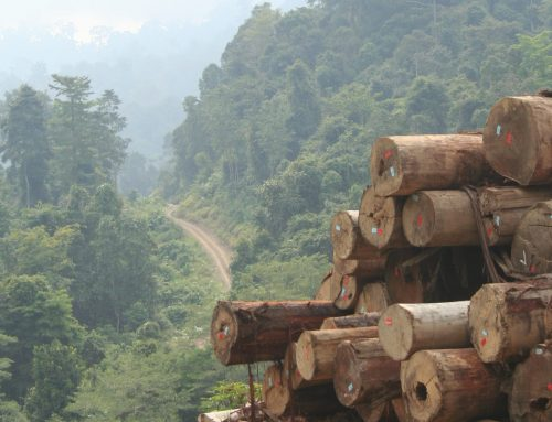 OPINION: Timber and environmental interests shouldn't be at odds